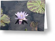 White Light Blue Tiped Waterlily Greeting Card
