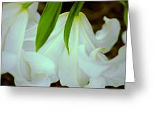White Lily Bows  Greeting Card