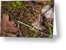 White-lined Sphinx Moth Greeting Card