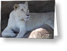 White Lion Looking Proud Greeting Card