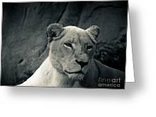 White Lioness Greeting Card
