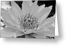 White Lotus 2 Bw Greeting Card