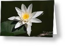 My White Lotus Greeting Card