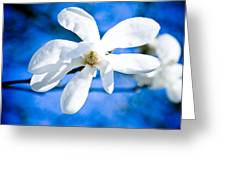 White Magnolia Blossom Greeting Card