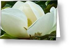 White Magnolia Elegance Greeting Card