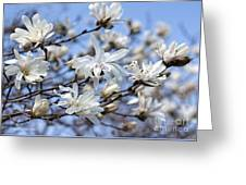 White Magnolia Magnificence Greeting Card