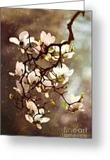 White Magnolias Greeting Card