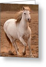 White Mare Approaches Number One Close Up Brighter Greeting Card