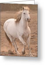 White Mare Approaches Number One Close Up Muted Greeting Card