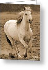 White Mare Approaches Number One Close Up Sepia Greeting Card