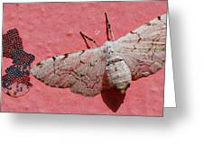 White Moth And Eggs Greeting Card