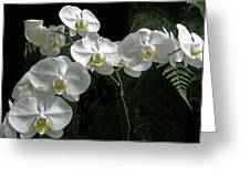 White Moth Orchid Phalaenopsis And Ferns Greeting Card