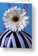 White Mum In Striped Vase Greeting Card