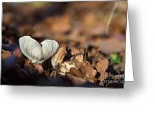 White Mushroom Long Gills Greeting Card