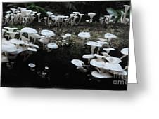 White Mushrooms Amazon Jungle Brazil 1 Greeting Card