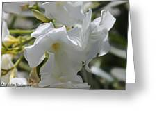 White Oleander Greeting Card