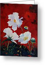 White On Red Poppies Greeting Card