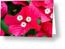 White On Red Trinity Greeting Card