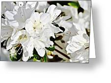 White On White Greeting Card