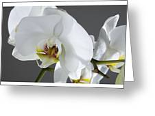 White Orchid 1b Greeting Card