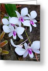 White Orchid Cluster With Hot Pink Greeting Card