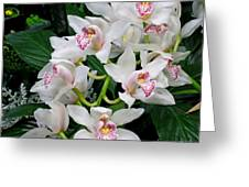 White Orchid In Full Bloom Greeting Card