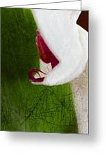 White Orchid Scratched Greeting Card