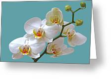 White Orchids On Ocean Blue Greeting Card