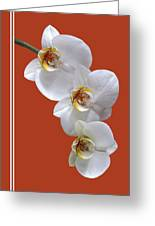 White Orchids On Terracotta Vdertical Greeting Card