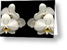 White Orchids Panorama Greeting Card