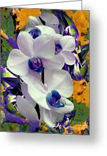 White Orchids With A Touch Of Purple Greeting Card by Doris Wood