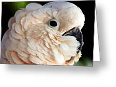 White Parrot Greeting Card