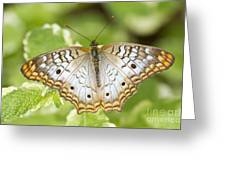 White Peacock Greeting Card
