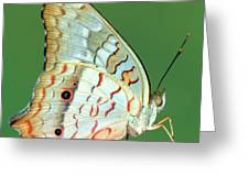 White Peacock Butterfly Anartia Greeting Card