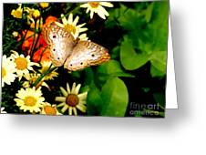 White Peacock Butterfly I I I Greeting Card
