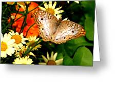 White Peacock Butterfly I V Greeting Card