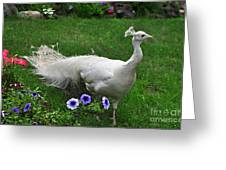 White Peacock In Our Garden Greeting Card