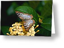 White Peacock Ins 18-1 Greeting Card