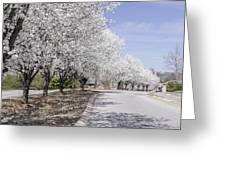 White Pear Trees Casting Shadows Greeting Card