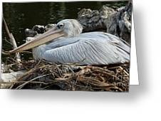 White Pelican 1 Greeting Card