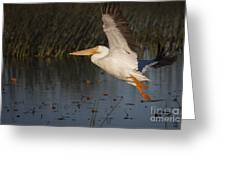 White Pelican 198 Greeting Card