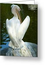 White Pelican Back Greeting Card