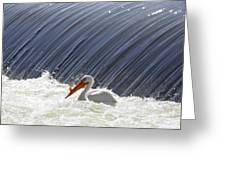White Pelican Over The Dam Greeting Card