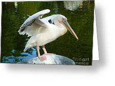 White Pelican Standing  Greeting Card