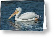 White Pelican Swimming Greeting Card