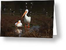 White Pelican Visitors To Gilbert Arizona Greeting Card