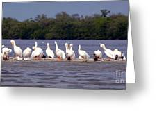 White Pelicans And Little Friends Greeting Card