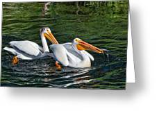 White Pelicans Fishing For Trout Greeting Card by Kathleen Bishop