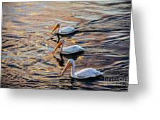 White Pelicans  In Golden Water Greeting Card