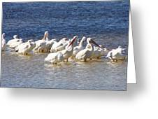 White Pelicans On Sanibel Island Greeting Card